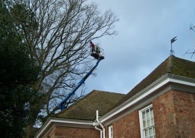 The value of a cherry picker - safer and better quality tree work