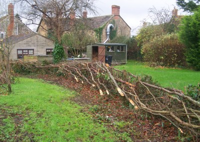 Hedgelaying winter 2015